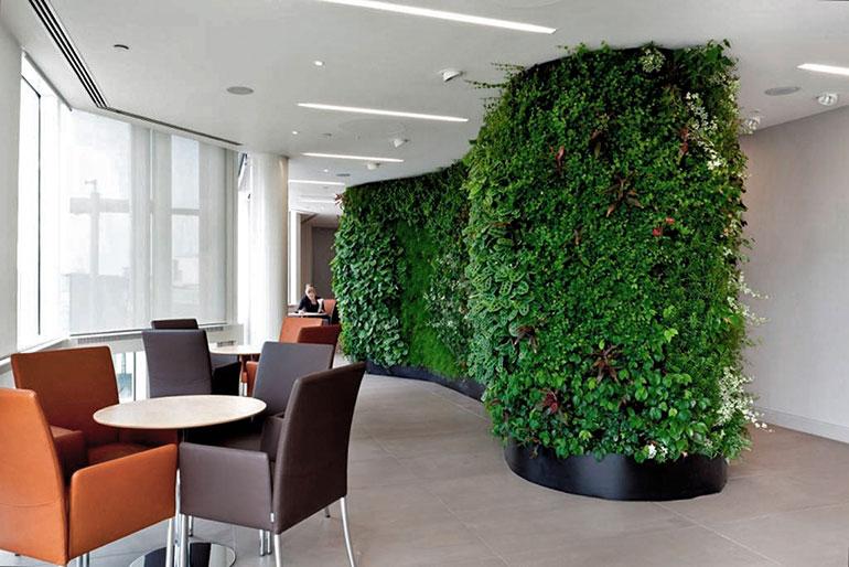 گل و گیاه در مبلمان دفتر کار باز